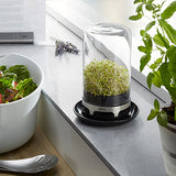Sprouting Jar • إناء الإستنبات - plantnmore