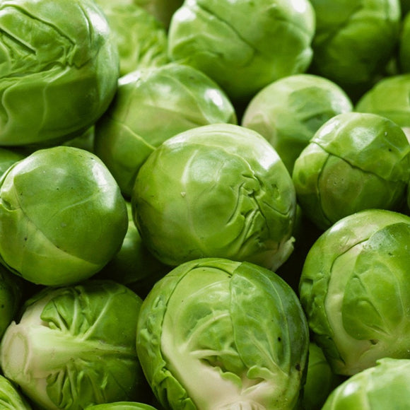 Catskill Brussel Sprouts • براسل سبراوت قزمية - plantnmore
