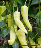 Pepper Sweet Banana • فلفل الموز - plantnmore