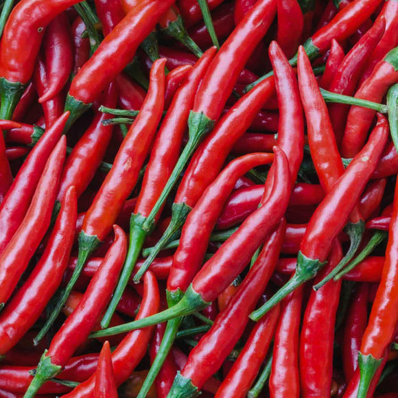 Pepper Hot Cayenne • فلفل كايين حار