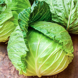 Cabbage Golden Acre • ملفوف ابيض