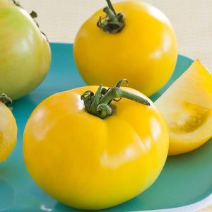 Tomato Lemon Boy Hybrid • طماط ليوموني اصفر - plantnmore