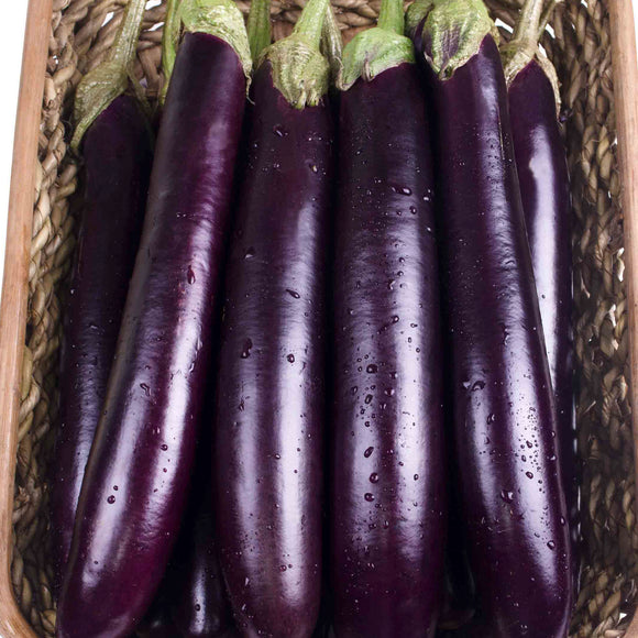 Eggplant Long Purple • باذنجان بنفسجي طويل - plantnmore