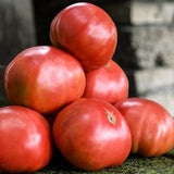 Mortgage Lifter Tomato • طماطم عملاق