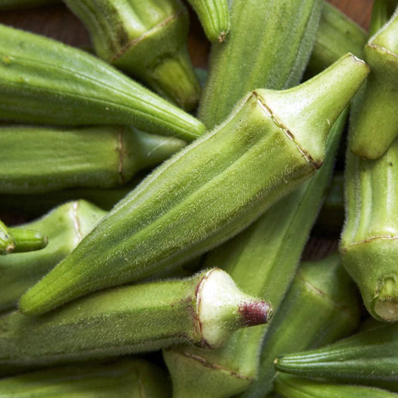 Okra Clemson Spineless • باميا - plantnmore