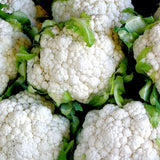 Cauliflower Snowball • زهرة ثلجي