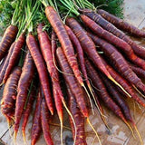 Carrot Purple Haze Hybrid • جزر بنفسجي