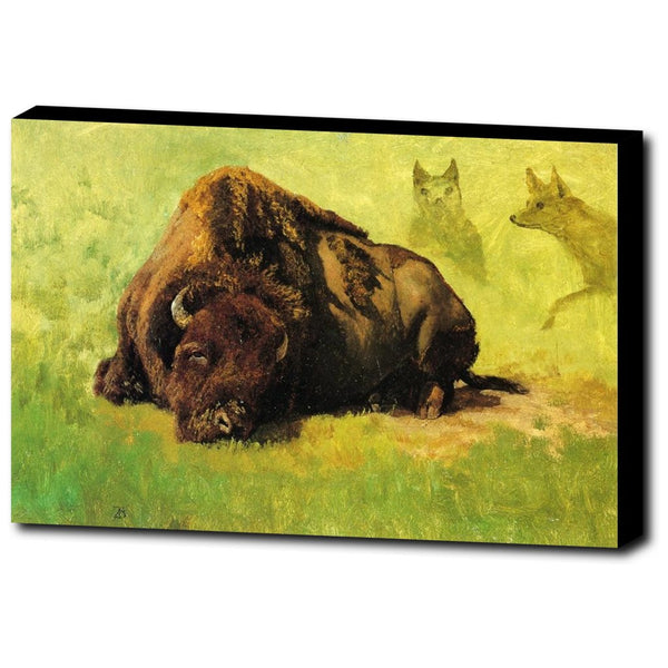 Premium Canvas Gallery Wrap - Bison With Coyotes In The Background By Albert Bierstadt