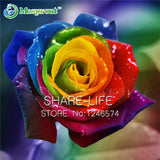 50Pcs seeds Rare Rainbow Rose Seed, Lover Colorful Home Garden Plants Rare Rainbow Rose Flower Seeds