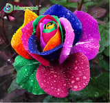 100pcs Flower Seed Holland Rose Seed Lover Gift Orange Green Rainbow Rare 24 Colors To Choose DIY Home Gardening Flower