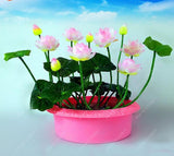 lotus seeds, bowl lotus water lily seeds rare Aquatic flower plant seed for home garden planting--5 pcs