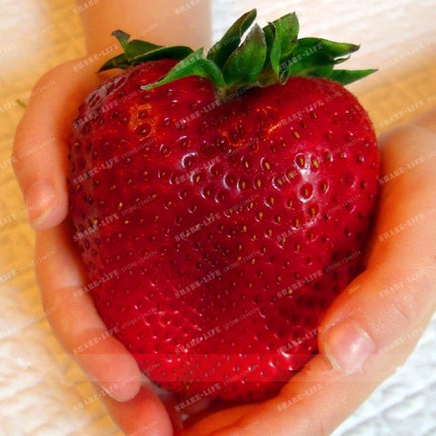 500pcs Rare Color Big Strawberry Seed Cherry Berry Fruit And Vegetable Seeds For Home Garden Planting