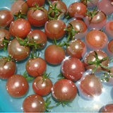 Bunches of bananas Tomato 200 Seeds organic vegetable