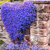 100Pcs/Bag Creeping Thyme Seeds Or Blue ROCK CRESS Seeds - Perennial Ground Cover Flower Natural Growth For Home Garden