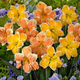 100 Pcs Narcissus Flower Daffodil Seeds Bonsai Plants Double Petals Absorption Radiation Potted DIY Home Garden Plant