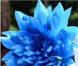 10 seeds Blue Dahlia Seeds Beautiful Gardens Dahlia pinnata Bonsai Plant Flower Seeds Perennial