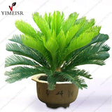 Cycas revoluta seeds Sago Palm Tree Tropical Fossil Easy to Grow Cycad Bonsai Tree seed for indoor plant seeds 1pcs/bag