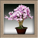 20 pcs/bag Rare Bonsai 12 Varieties Azalea Seeds DIY Home & Garden Plants Looks Like Sakura Japanese Cherry Blooms Flower Seeds
