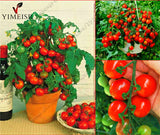 Potted Sweet Cherry Tomato seeds mini vegetable seeds Organic dwarf fruit Vegetable seeds Bonsai Dwarf Tomato plant 50 seeds/bag