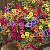 200pcs Hanging Petunia Mixed Seeds Color Waves Beautiful Flowers for Garden Plant