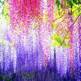 Wisteria Wisteria Vine Saplings Seed Upscale Vegetable Garden Plants Flower Seeds 5 Seeds Easy To Grow