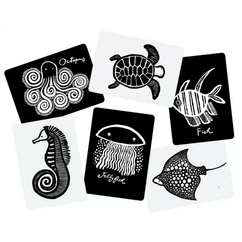 Sea Life Black-and-White Cards for Babies - Gifted and Present