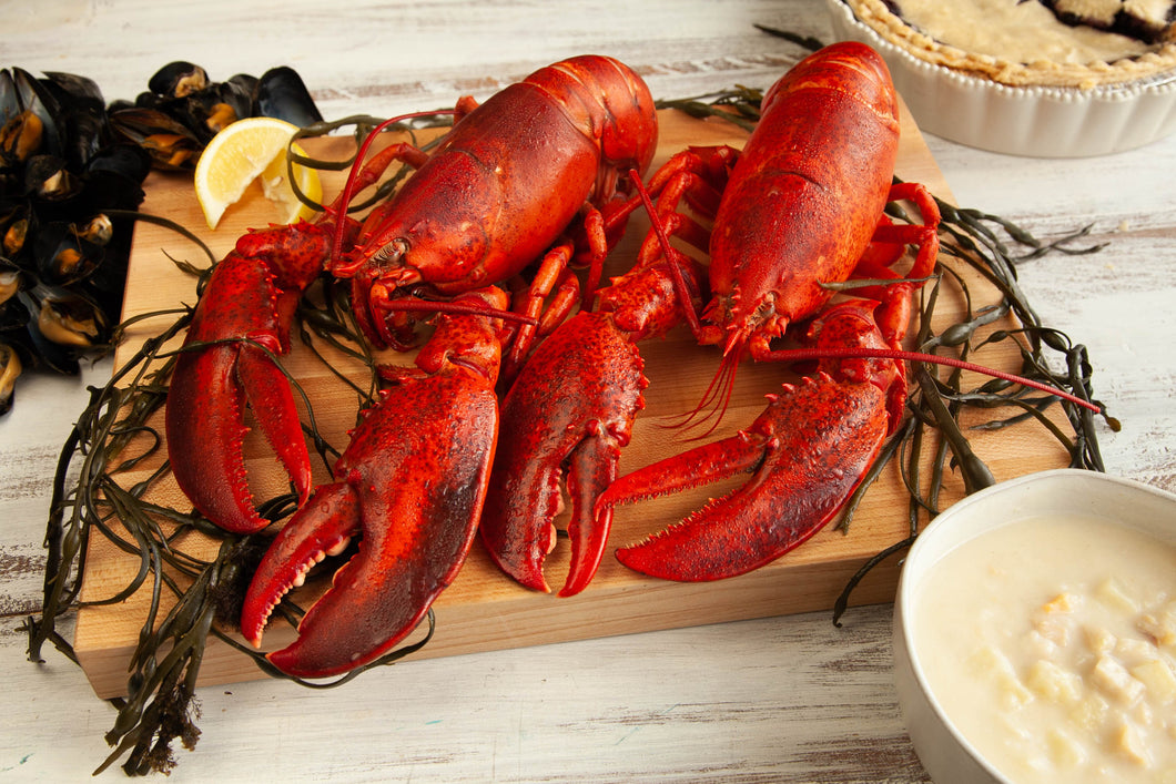 Live Maine Lobster Bundle - Lobster Taxi