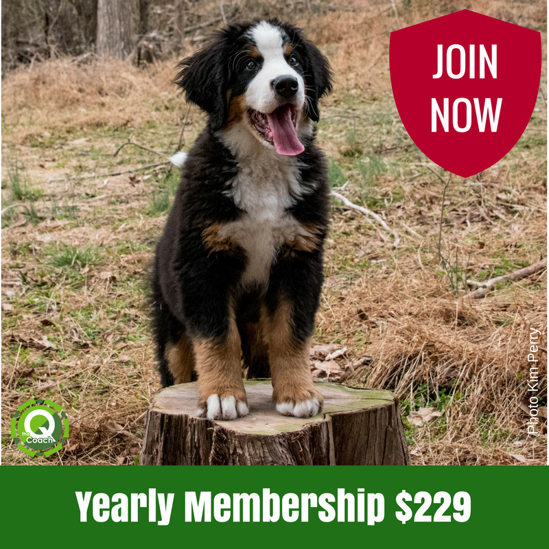 Announcing: The Q-Membership!