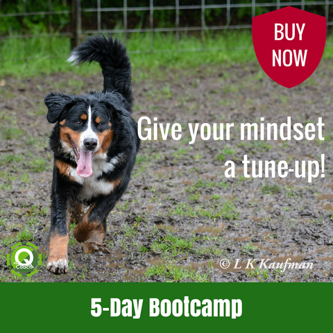 5-Day Bootcamp - The Q Coach