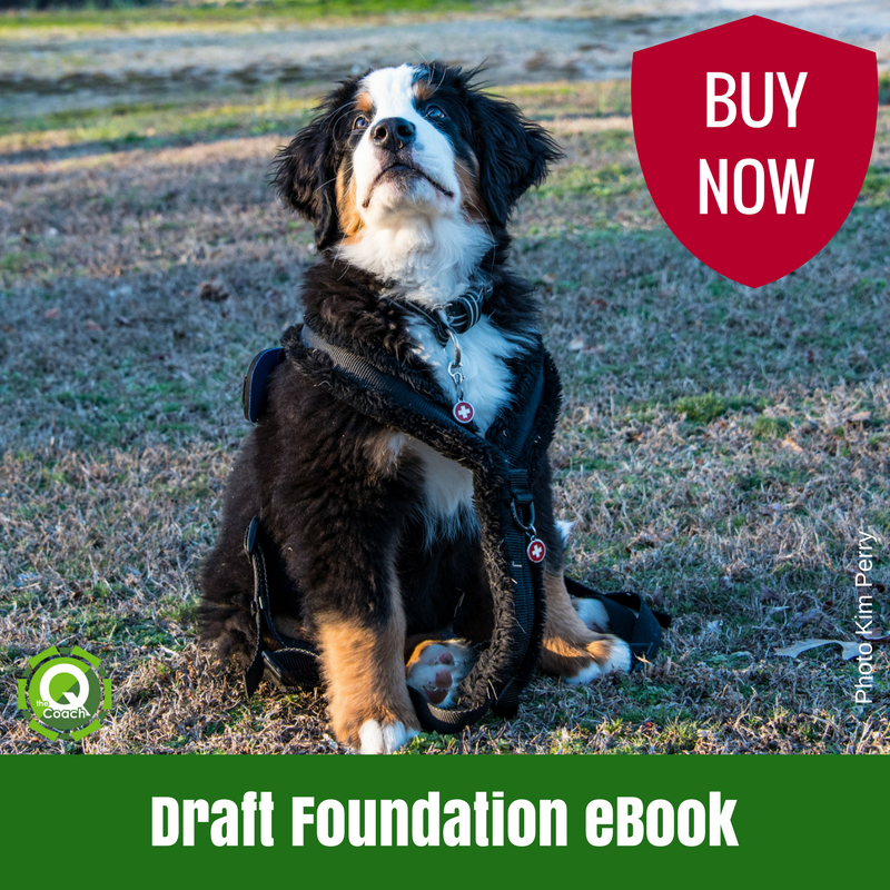 Guide to Draft Foundation - EBOOK - The Q Coach