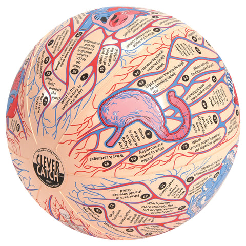 Clever Catch Ball: Human Anatomy