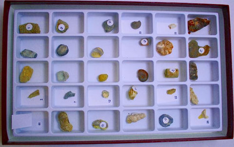 Advanced Fossil Collection Rock Mineral Set 30 Specimens