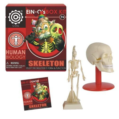 Ein-O's Human Biology Box Kit - The Skull and Skeleton