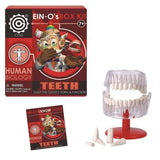 Ein-O's Human Biology Box Kit - The Teeth