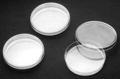 Borosilicate Glass Petri Dishes: 60mm: Pack of 10
