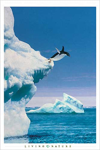 The Diving Penguin - Wildlife Poster, 24x36