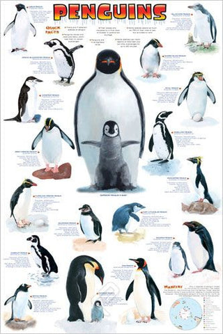The Different Species of Penguins - Wildlife Poster, 24x36