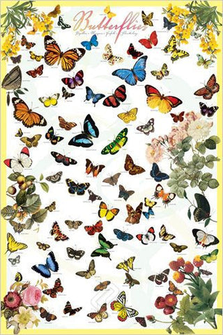 Butterflies of the World Poster, 24x36