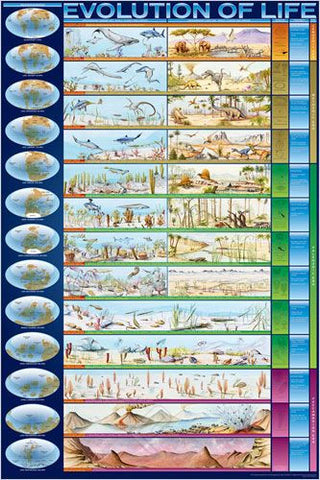 A Timeline of the Evolution of Life - Biology Poster, 24x36
