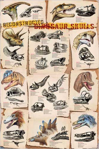 A Reconstruction of Dinosaur Skulls - Archaeology Poster, 24x36