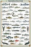 50 Different Species of Freshwater Fish - Wildlife Poster, 24x36