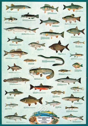 Freshwater Fish From Around the World - Marine Wildlife Poster, 26x38
