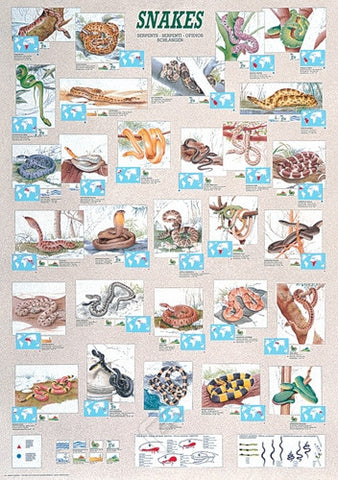 Colorful Snakes From Around the World Poster, 26x38