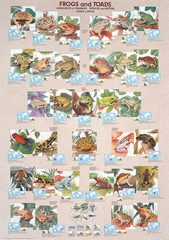 Frogs and Toads From Around the World - Wildlife Poster, 26x38