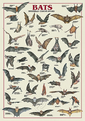 Bat Species From Around the World - Wildlife Poster, 26x38