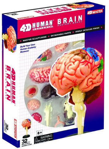 4D Master Human Anatomy - Human Brain Model