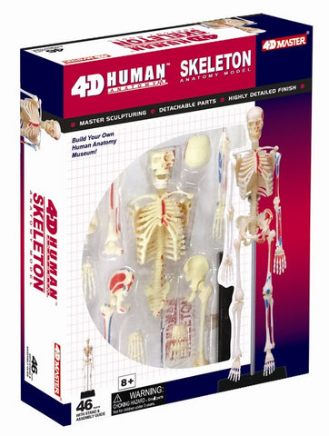 4D Master Human Anatomy - Human Skeleton Model