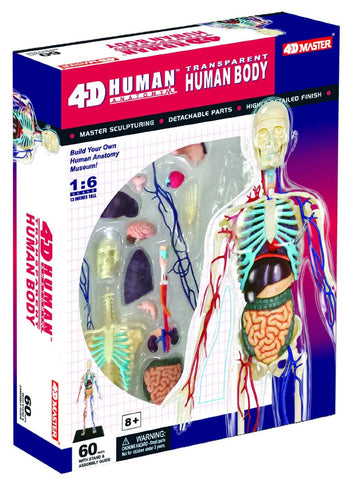 4D Master Human Anatomy - Transparent Human Body Model