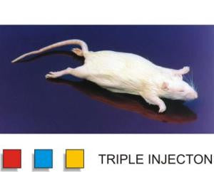 "Preserved 7-9"" Rat, Triple Injected, Vacuum Pack"