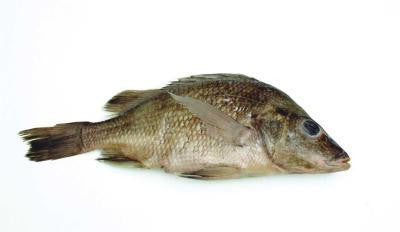 "Preserved 7-9"" Perch, Vacuum Pack, Plain"